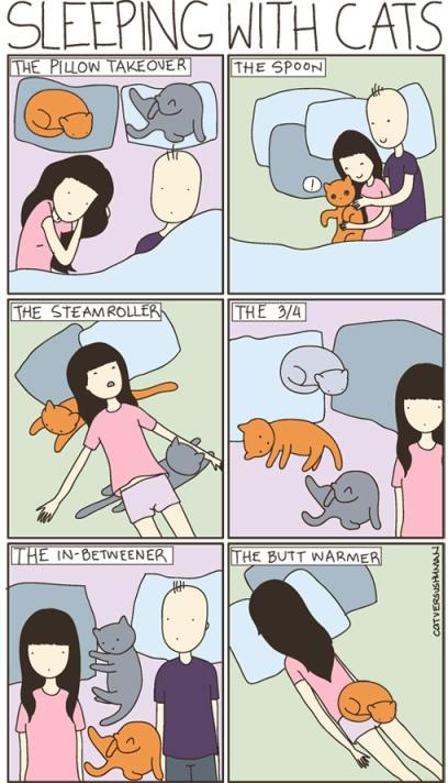 Das War Mal Mein Bett Cat Versus Human Sleeping With Cats Ein